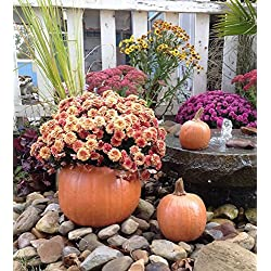Decorative, Cast Stone Pumpkin Planter, Fall & Autumn Decor, Halloween Decoration