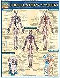 Circulatory System (Quickstudy: Academic)