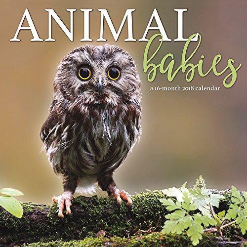 Read Online Animal Babies 2018 Wall Calendar PDF