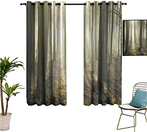 Forest,Fun Curtains,Foggy Oak Forest in Autumn Morning Sunbeams Entering from The Back Image Print,Isolate Sunlight Dark Curtains,55x72 Inch Tan and White