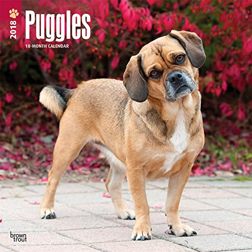 Puggles 2018 12 x 12 Inch Monthly Square Wall Calendar, Animals Mixed Dog Breeds (Multilingual Edition)