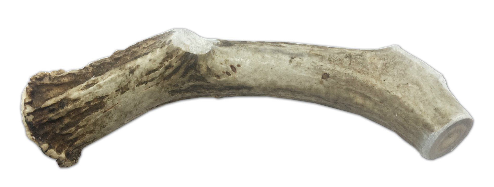 WhiteTail Naturals XX-Large Thick Jumbo Deer Antler Dog Chew 8-10 Inches Long