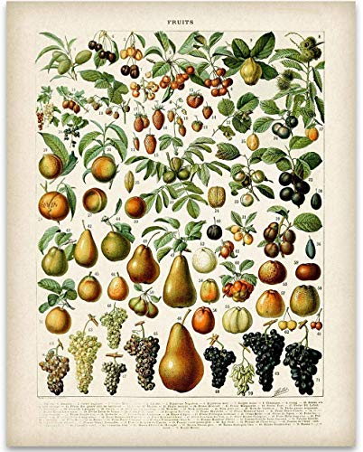 Fruits Botanical in French Art Print - 11x14 Unframed Art Print - Great Wall Decor Under $15 for Your Kitchen ()