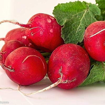 Civilys Seeds-50pcs Organic Beet Seeds 'Detroit Dark Red' –Rainbow Beet Mixture (Beta vulgaris) Carrot Vegetable Seeds for Planting : Garden & Outdoor