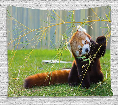 YouXianHome Africa Tapestry Tablecloth, Cute Red Panda on The Field Playing with Bamboo Branches Native Himalaya Mountains, Tapestry Wall Hanging for Men, 60 W x 40 L Inches, Brown Green -