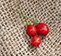 Texas Chiltepin Heirloom Pepper Premium Seed Packet + More
