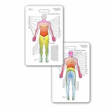 Amazon Neuro Dermatome Diagram Vertical Badge Id Card Pocket