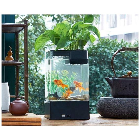 Hutiee Kits de iniciación para Tanque de Peces con Acuario coloré en Forma de Cubo en Forma de Acuario con Base de Pedestal: Amazon.es: Productos para ...