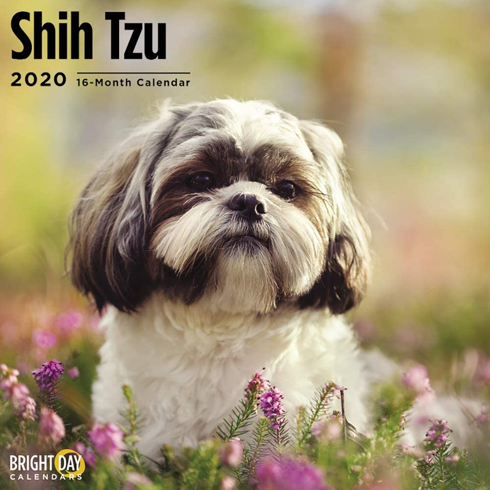 2020 Shih Tzu Wall Calendar by Bright Day, 16 Month 12 x 12 Inch, Cute Dogs Puppy Animals Chrysanthemum Canine