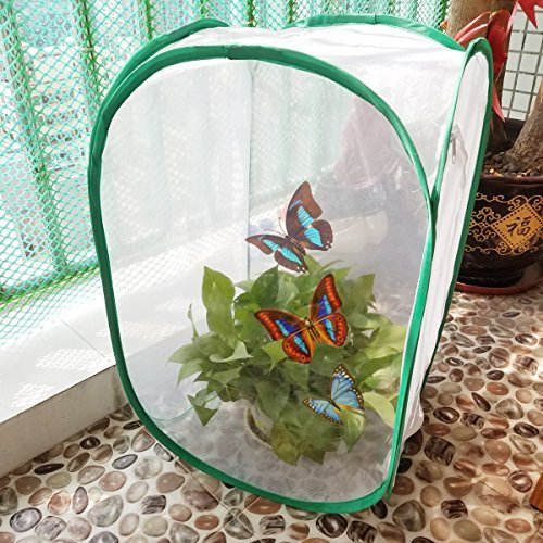 Sackorange Insect and Butterfly Habitat Terrarium - 23.6 Inches Tall