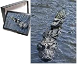 PHOTO JIGSAW PUZZLE. Photo Puzzle (252 Pieces). Artwork depicting USA, Florida, Orlando, Gatorland, alligators. Shipping from USA.