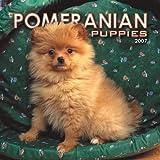 Pomeranian Puppies 2007 Mini Calendar