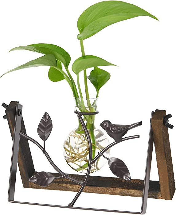 The Best Desktop Bird Stand