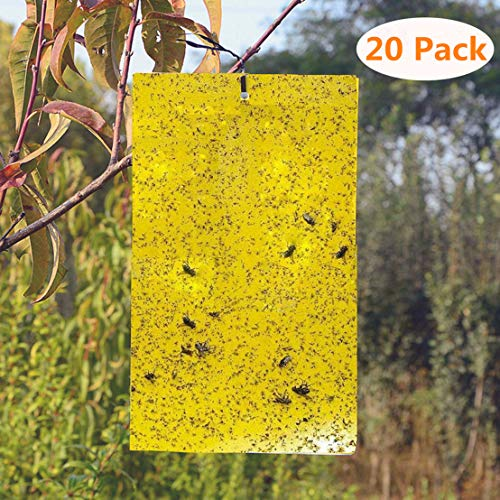 BestTrap 20-Pack Dual-Sided Yellow Sticky Traps Flying Plant Insect Such as Fungus Gnats, Whiteflies, Aphids, Leafminers - (6x8 Inches, Included 20pcs Twist Ties) ()