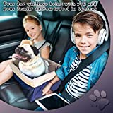 Devoted Doggy Deluxe Dog Booster Car Seat by Metal Frame Construction - Clip on Safety Leash - Zipper Storage Pocket – Perfect for Small and Medium Pets up to 20 lbs - Blue/Beige
