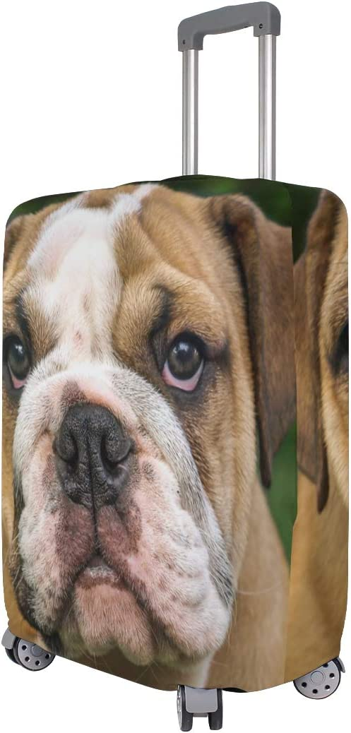 Travel Luggage Cover British Bulldog Brown Facing You Suitcase Protector