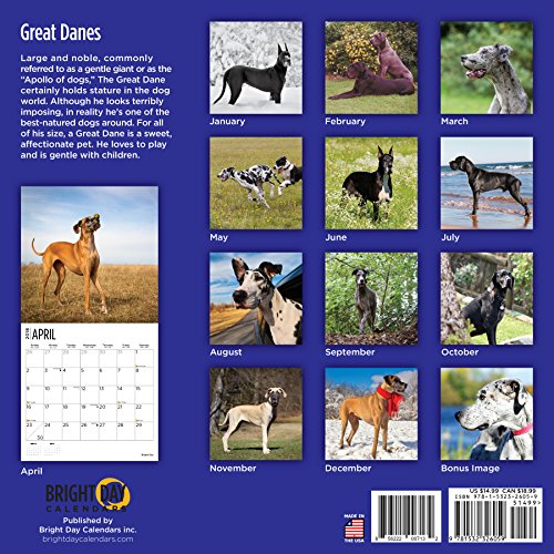 Great Danes 2018 16 Month Wall Calendar 12 x 12 inches Bright Day Calendars Publishing Photo #7