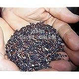 Plentree Seeds Package: 30 Premium Seeds: Premium Rice Seeds Oryza Sativa Purple Black Rice Rare Asian Heirloom Gourmet