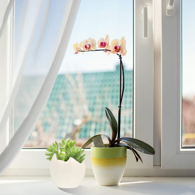 Hemoton 3Pcs di Ceramica Succulente Cactus Vaso di Fiori Carino Guscio Duovo di Porcellana di Forma Fioriera per Interni Esterni Giardino Decorazione della Casa