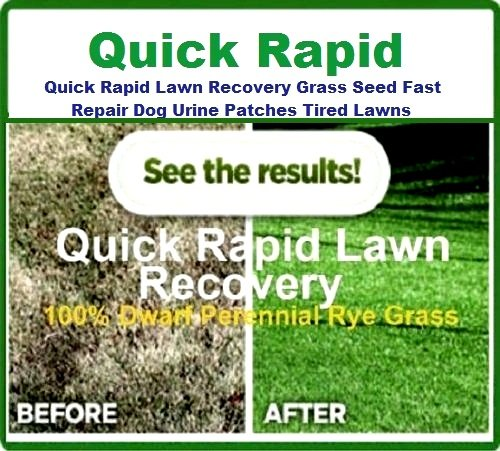 5kg Quick Rapid Lawn Recovery Grass Seed Fast Repair Dog Urine Patch Tired Lawns From Ivisons Seeds