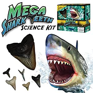 Discover with Dr. Cool Mega Shark Teeth Science Kit