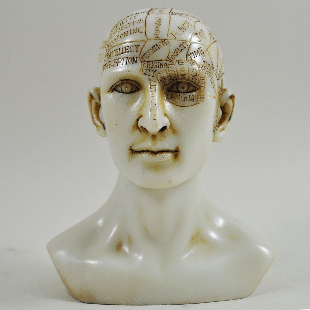 Testa per frenologia, statua decorativa in resina effetto marmo, accessorio medico, altezza 15 cm Fiesta Studios