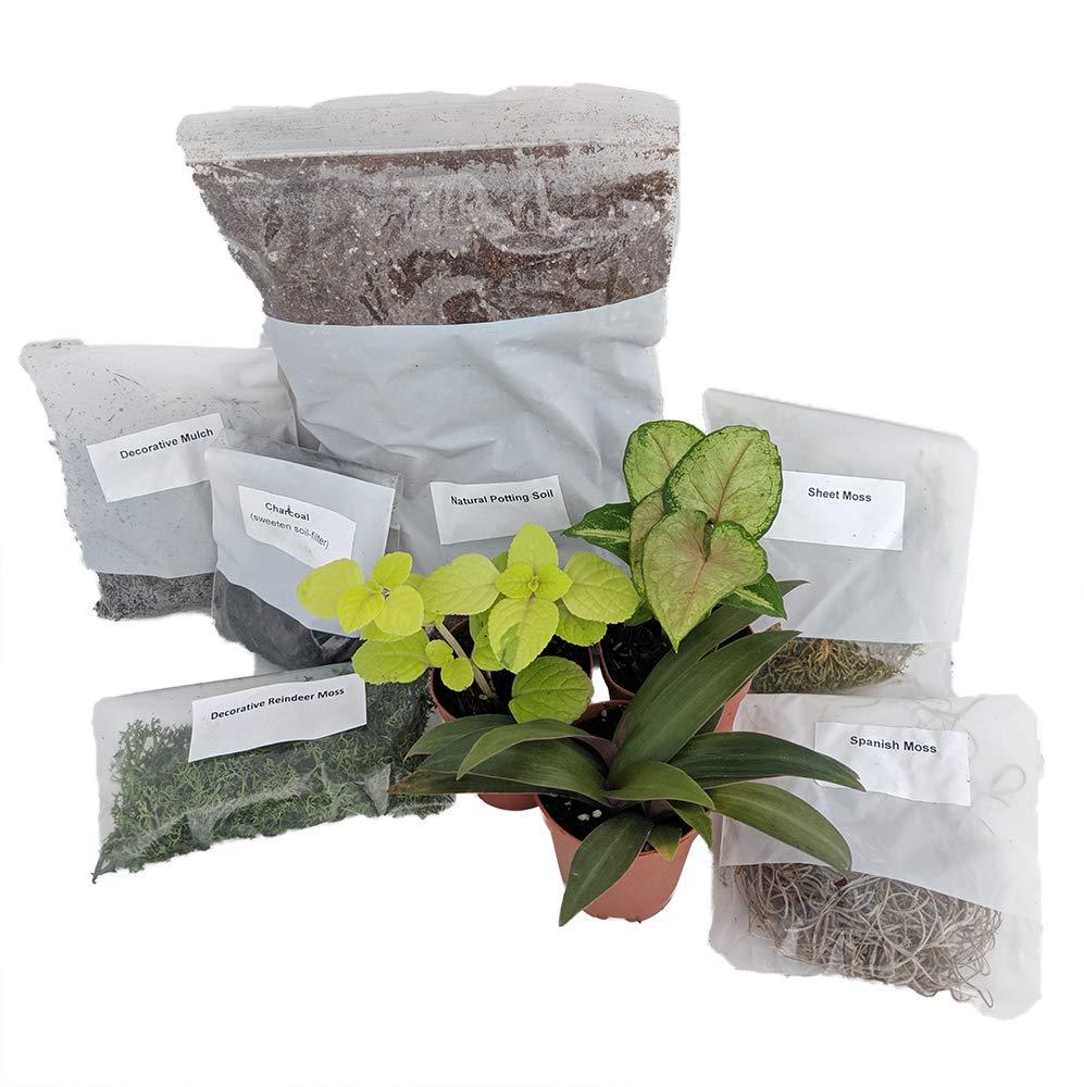 Terrarium/Fairy Garden Kit with 3 Plants - Create Your Own Living Terrarium