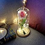 raillery-Beauty-and-The-Beast-Rose-Kit-Romantic-Immortal-Flower-Micro-Landscape-Rose-Simulation-Glass-Shade-LED-Great-for-Valentines-Day-Mothers-Day-Anniversary-Wedding-Hot-Pink