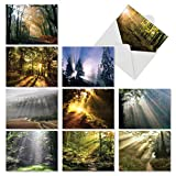 Shining Through: 20 Assorted Blank All Occasions Note Cards Showing Sunlit Landscapes and Breathtaking Plantlife, with Envelopes. AM1735OCB-B2x10