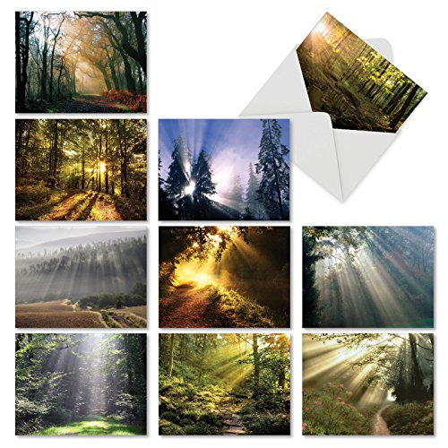 Shining Through: 20 Assorted Blank All Occasions Note Cards Showing Sunlit Landscapes and Breathtaking Plantlife, with Envelopes. AM1735OCB-B2x10 by The Best Card Company