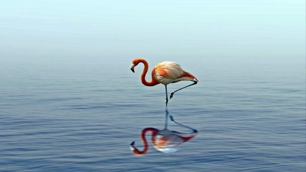 Kpoiuy Paquete De Pintura por NúMero En Lienzo Pintura Al óLeo Flamenco Reflejo Lago Agua Cuadros Pintados A Mano del Arte del Colorante De AcríLico para La Sala De Estar