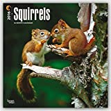 Squirrels - 2016 Calendar 12 x 12in