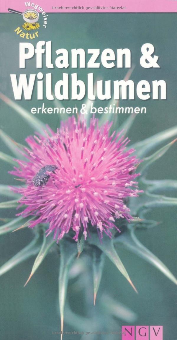 Pflanzen und Wildblumen erkennen & bestimmen: Wegweiser Natur ...