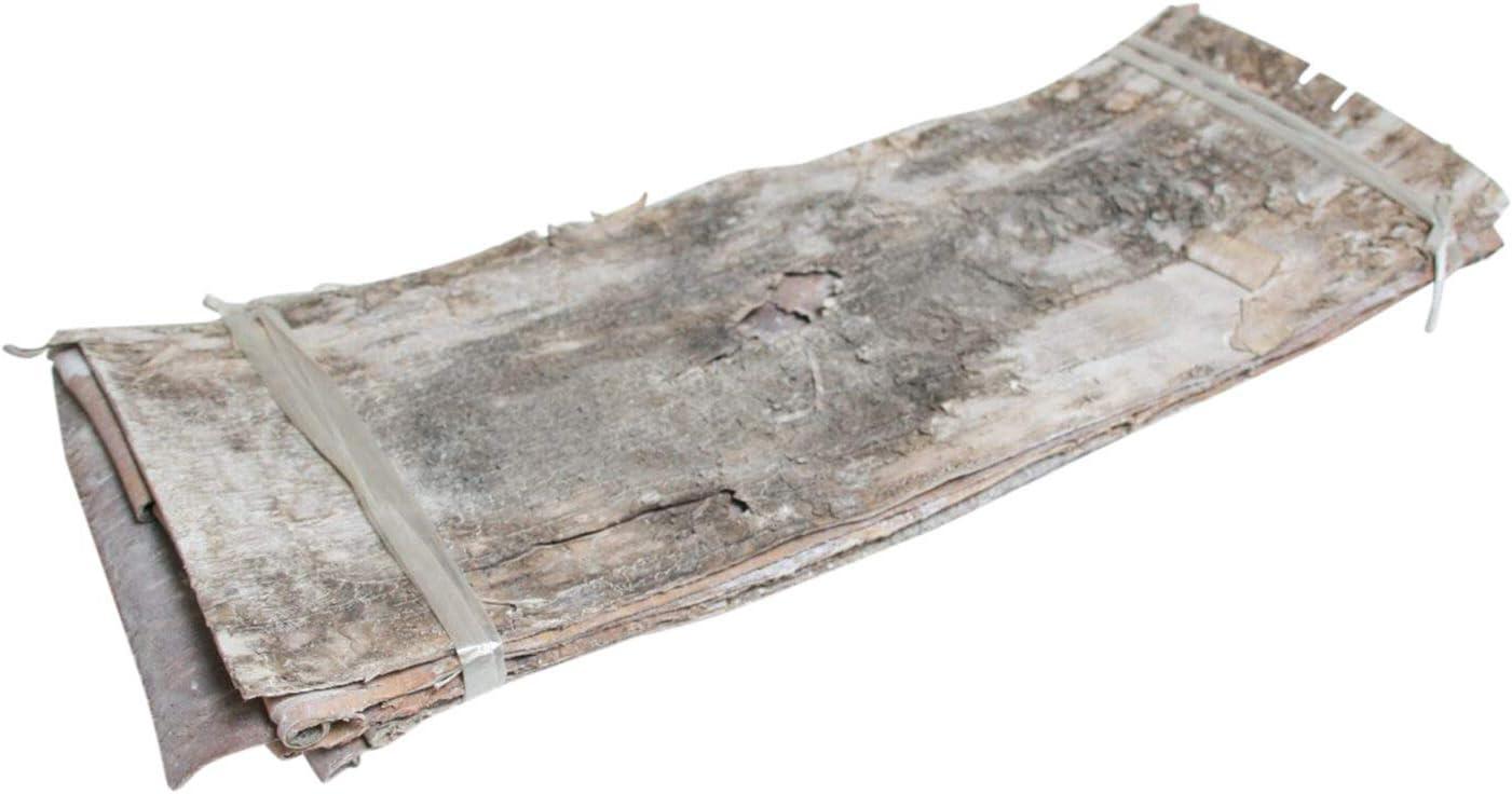 Pandecor Set 5 Fogli di Corteccia di Betulla Naturale 24 cm secca 70 larg stabilizzata e sbiancata lungh