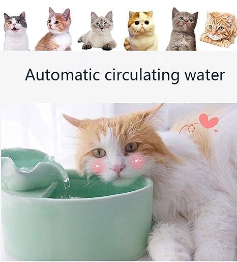 Bebedero Gatos Fuente de Agua para Mascotas, Perro y Gato ...