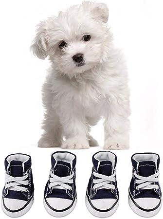 Cute Navy Blue Converse Look A Like Dog