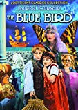 The Blue Bird (Silent) by Tula Belle