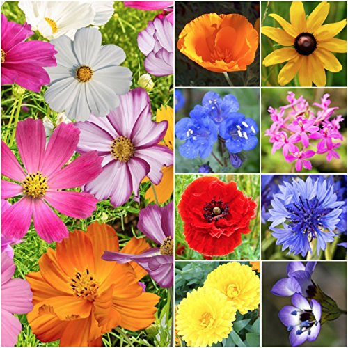 (30,000 Seeds, Wildflower Mixture All Annual (20 Species) Seeds By Seed Needs)