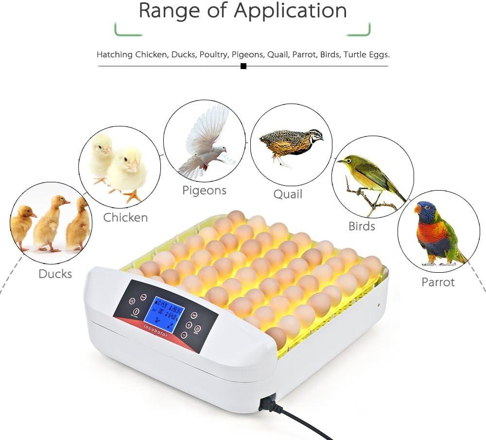 WAZA HHD Temperatura autom/ática Incubadora autom/ática con Forma de gallina con l/ámpara de Tiro incorporada Tapa Transparente
