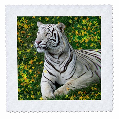 Tigers - White Tiger - 10x10 inch quilt square (qs_4830_1)