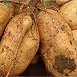 buy Brand New! Vegetable seeds Sweet potatoes Sweet Potato, Batata Mameya by Prorganics Farm garden 20pcs seeds of hope now, new 2020-2019 bestseller, review and Photo, best price $1.90