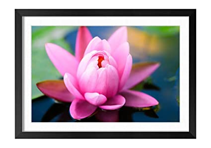 Amazon lotus flower pond black frame art print poster home lotus flower pond black frame art print poster home wall decor14x20 inch mightylinksfo