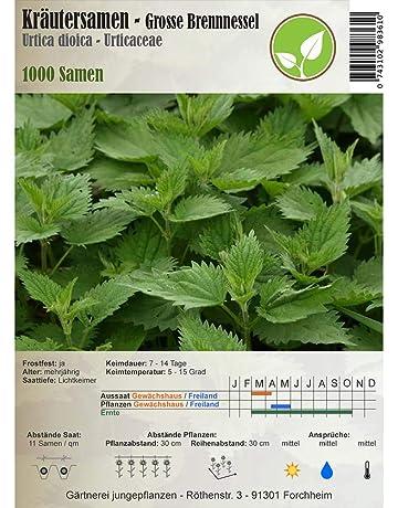 Semillas de hierbas - Ortiga grande / Urtica dioica 1000 semillas