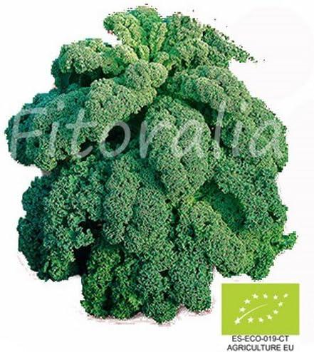 Col Kale Ecológica maceta 10,5 cm - FITORALIA: Amazon.es: Jardín