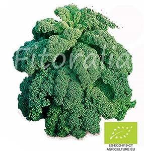 Col Kale Ecológica maceta 10,5 cm - FITORALIA