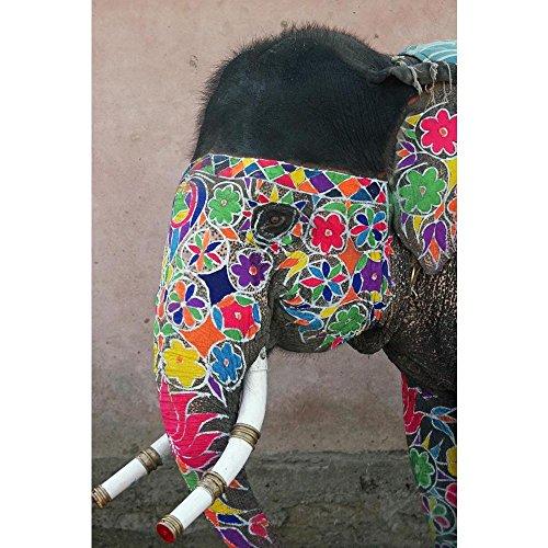 (Pitaara Box Annual Elephant Festival in Jaipur India Peel & Stick Vinyl Wall Sticker 28 X 42Inch)