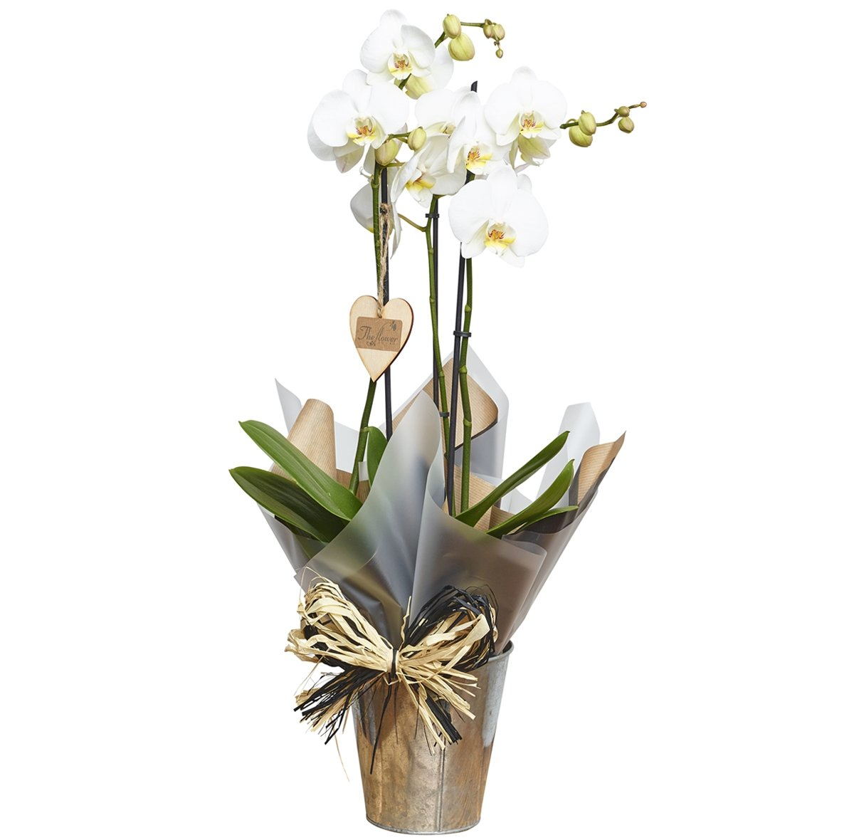 The Flower Rooms - Phalaenopsis Orchid Gift - Flower Gift