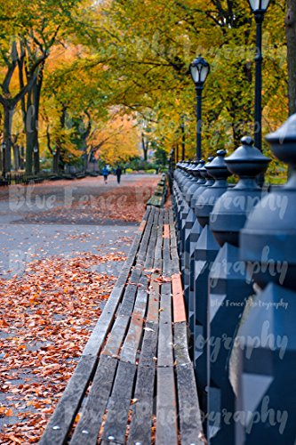 Autumn Photography, Benches, Central Park Promenade, Mall, Foliage, Fall, New York Print, Art Print, NY, Manhattan, Wall Art, Living Room, Sizes Available from 5x7 to - Manhattan Mall