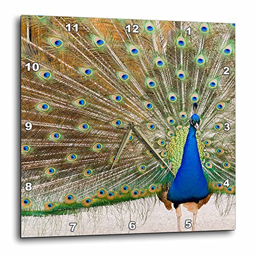 Chateau Ste Michelle - 3dRose DPP_95813_1 Peacock, Chateau Ste. Michelle Winery, Washington-US48 JMI0068-Janis Miglavs-Wall Clock, 10 by 10-Inch