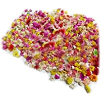 Small Star Natural Dried Flower Head Home Wedding Wreath Scrapbooking Decorations Multicolor Daizy Flowers for Glass…